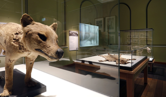 Exhibitions_-_Thylacine