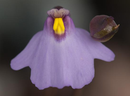 Herbarium_Census_1