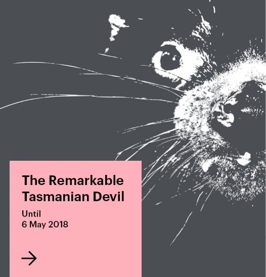The Remarkable Tasmanian Devil