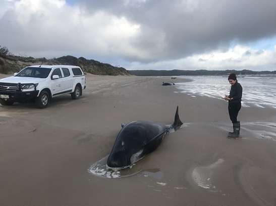 Kirrily on beach with whale