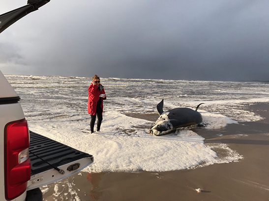 Belinda on beach with whale
