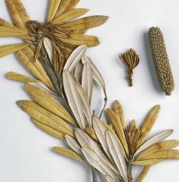 Tasmanian Flora and Fauna