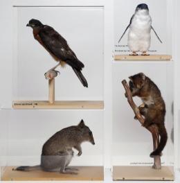 Loan specimens