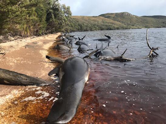Whales at Betsy's Bay