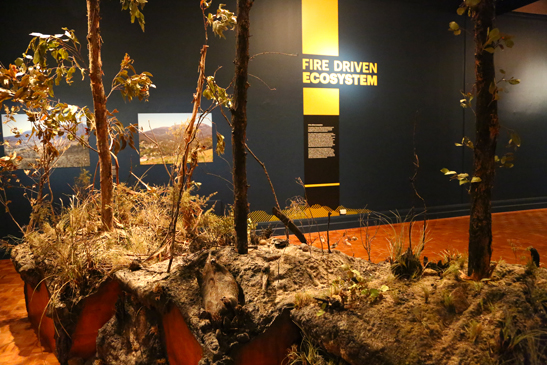 Fire Ecology Gallery